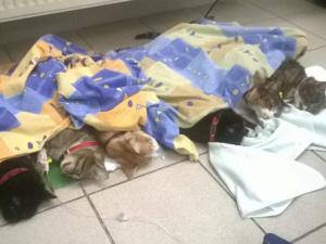 Akcja sterylizacja-Fundacja Animals