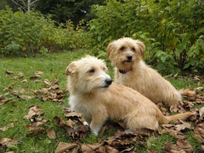 Kuba_i_Misio_Schronisko_Fundacja_Animals_1