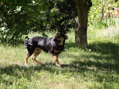 Sunia_Romcia_Schronisko_Fundacja_Animals_3