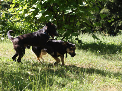 Sunia_Romcia_Schronisko_Fundacja_Animals_4