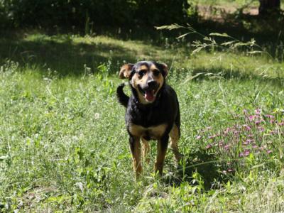 Sunia_Romcia_Schronisko_Fundacja_Animals_5