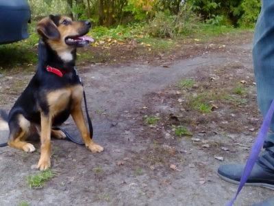 Nilo do adopcji - Fundacja Animals