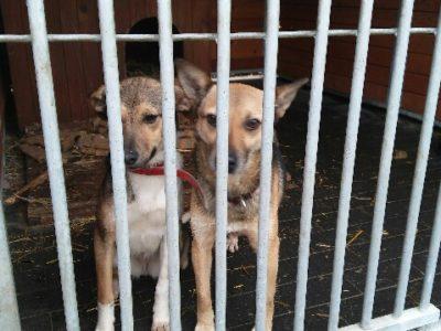 Billy do adopcji - Fundacja Animals