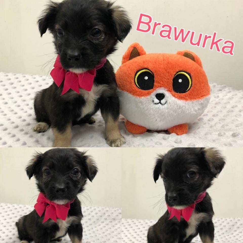 Brawurka